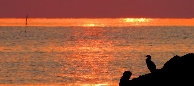 2015-8-12夕陽と海鵜
